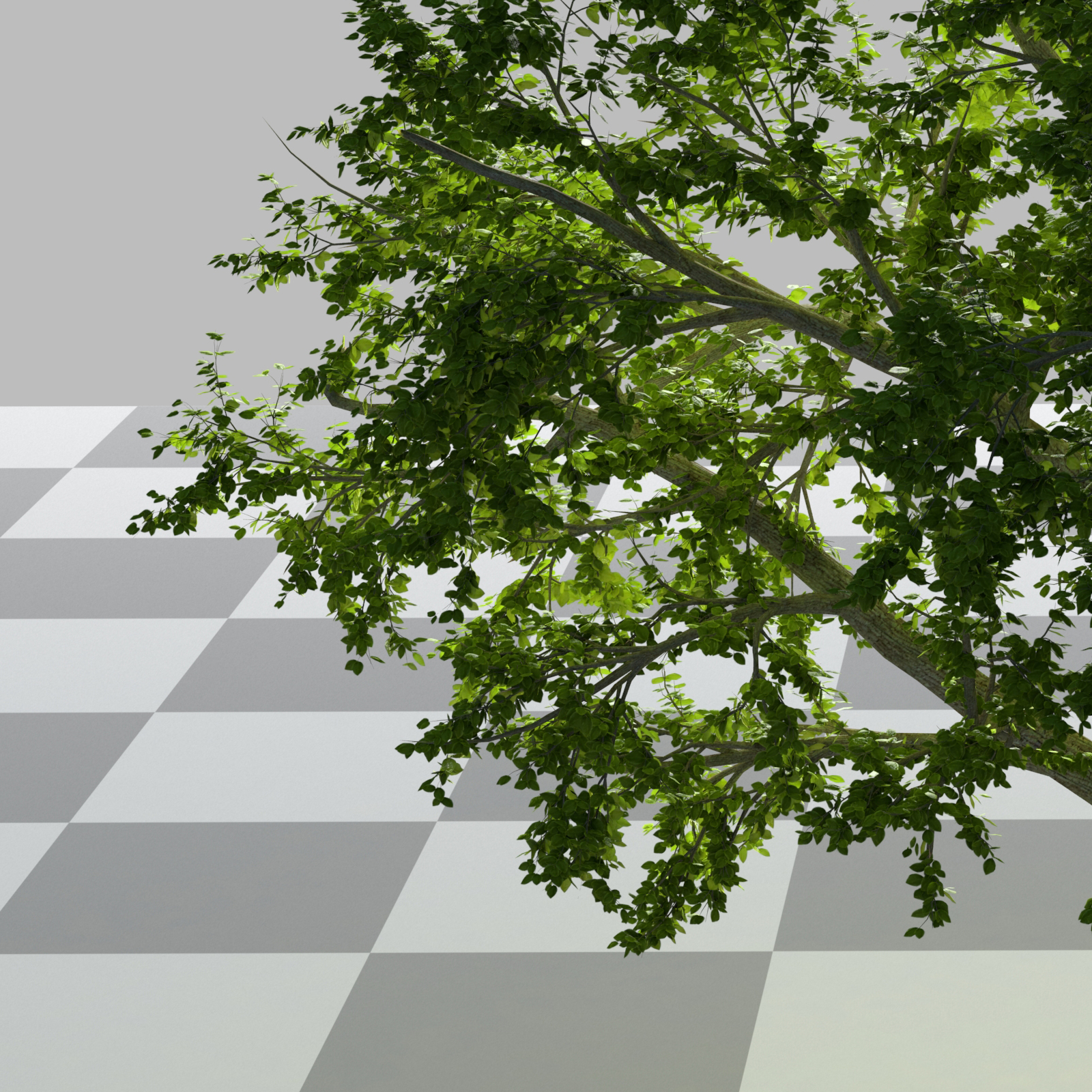 leafs_wip2